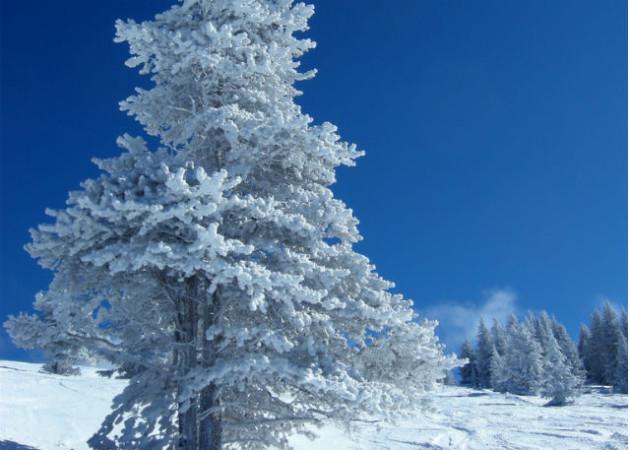 skijalište-na-goču